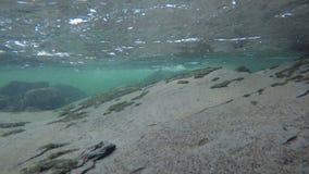 Onder een koude rivier en een waterval in de recente herfst in de noordpoolcirkel, die zich rond de rotsachtige bodem bewegen stock videobeelden
