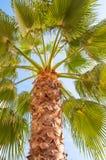Onder een palm Stock Afbeelding