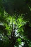 Onder een Palm Royalty-vrije Stock Foto