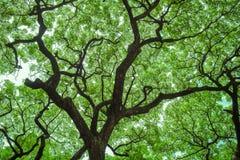 Onder grote boom met tak overdrijf stock afbeelding