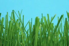 Onder het gras stock afbeelding