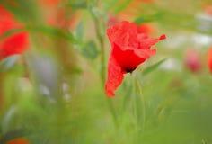 Onder het groene gras Royalty-vrije Stock Fotografie