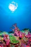Onder het overzees in Similan, het Overzees Thailand van het Noordenandaman stock foto