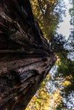 Onder mening van het detail van de ruwe schors van één van de torenhoge bomen van Weg van de Reuzen, Californië, de V.S. royalty-vrije stock afbeeldingen
