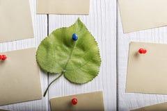 Onder natuurlijke stickers Stock Foto's