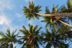 Onder palmen Stock Foto's