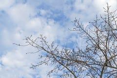 Onder van boom en met tak overdrijf stock foto's