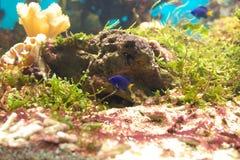 Onder water Royalty-vrije Stock Afbeelding