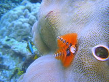 Onder water Royalty-vrije Stock Fotografie