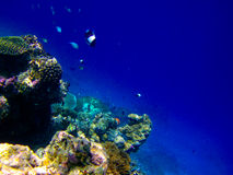 Onder waterwereld in de Maldiven Stock Foto