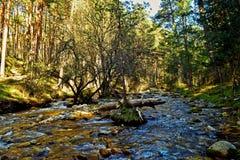 Onderaan de rivier naast het bos Stock Afbeeldingen