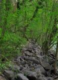 Onderaan door de rivier royalty-vrije stock foto