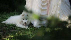 Onderaan mening door groene takken op hond en vrouw die huwelijkskleding dragen stock video