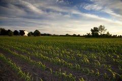 Onderaan op het Landbouwbedrijf Royalty-vrije Stock Afbeeldingen