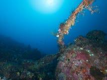 Ondergedompeld wrak van een P47 Blikseminslag in Raja Ampat, Indonesië royalty-vrije stock afbeeldingen