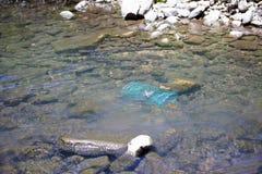 Ondergedompelde rivierkreeften of crawdad val in water stock foto