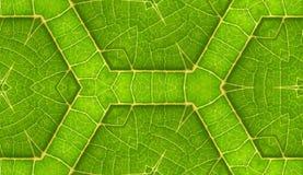 Onderkant van de Groene Achtergrond van de Tegel van het Blad Naadloze stock afbeelding