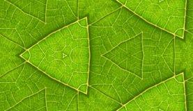 Onderkant van de Groene Achtergrond van de Tegel van het Blad Naadloze stock fotografie