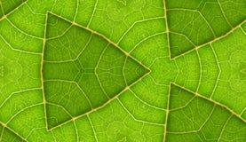 Onderkant van de Groene Achtergrond van de Tegel van het Blad Naadloze royalty-vrije stock fotografie