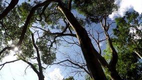 Onderkantmening van bomen en vegetatie op de bos Lage hoek van de bergreserve Roterend schot stock footage