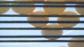 Onderkantmening van eieren die zich langs de metaaltransportband bewegen stock footage