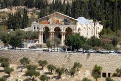Onderstel van Olijven in Jeruzalem Israël stock afbeeldingen