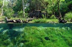 Onderwater royalty-vrije stock foto's