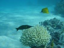 Onderwater 1 royalty-vrije stock fotografie
