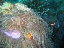 Onderwater Stock Foto's