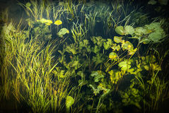 Onderwater 3 Royalty-vrije Stock Afbeeldingen