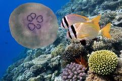 Onderwater beeld van kwallen Royalty-vrije Stock Afbeelding