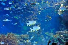 Onderwater beeld van tropische vissen stock afbeeldingen