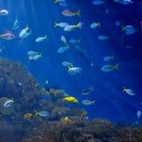 Onderwater beeld van tropische vissen stock fotografie
