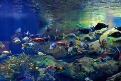 Onderwater beeld van tropische vissen royalty-vrije stock afbeeldingen