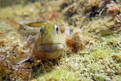 Onderwater bewoner stock fotografie