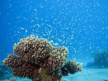 Onderwater Confettien Royalty-vrije Stock Fotografie