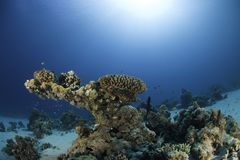 Onderwater ertsader stock afbeeldingen