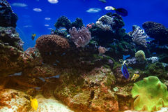 Onderwater ertsaderscène Stock Foto's