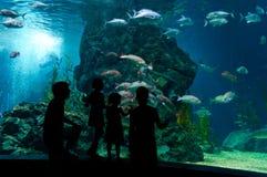 Onderwater familie Stock Foto