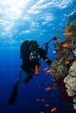 Onderwater fotograaf Royalty-vrije Stock Afbeeldingen