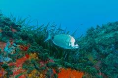 Onderwater fotografie Royalty-vrije Stock Foto