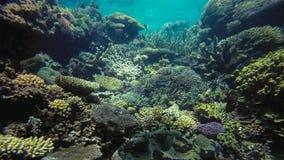 Onderwater het panoramalandschap van het wereldkoraalrif royalty-vrije stock afbeelding