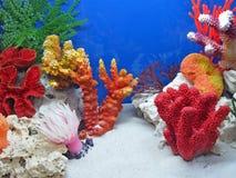 Onderwater kleurrijke stenen, kleurendiversiteit, Stock Afbeeldingen