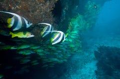 Onderwater koraalrif royalty-vrije stock afbeelding