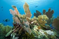 Onderwater Koraalrif Stock Foto