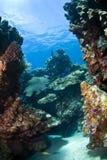 Onderwater koraalrif stock fotografie