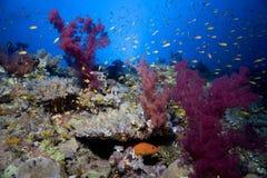 Onderwater koraalrif Stock Afbeelding