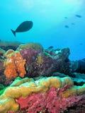 Onderwater koraalrif met vissen Stock Afbeelding