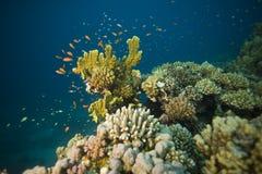 Onderwater koraalrifscène stock afbeeldingen
