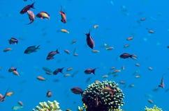 Onderwater koralen en Rode Overzeese vissen Royalty-vrije Stock Afbeelding